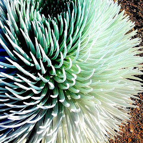Plant Life in Hawaii by Christopher Charlton - Nature Up Close Other plants ( nature, color, plants, hawaii, flower )
