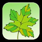 CACCU Mobile Deposit icon
