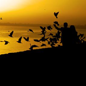 Morning  by Anurag Bhateja - Landscapes Sunsets & Sunrises ( sukhna lake, chandigarh, couple, india, sunrise, birds )