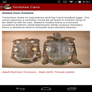 【免費書籍App】TORTOISE CARE 101-APP點子
