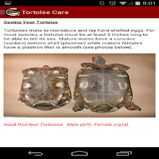 tortoise care 101   android apps on google play