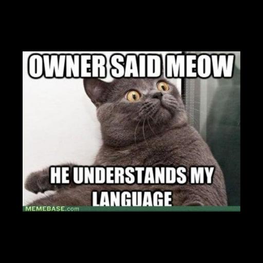 meme FUNNY CAT LOGO-APP點子