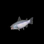 Gaspesie Salmon fishing