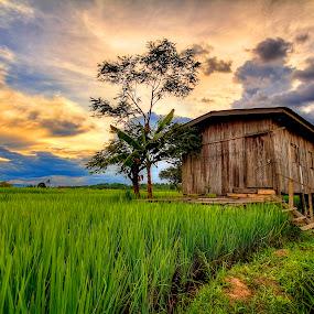 Farmhouse by Johan Wan - Landscapes Prairies, Meadows & Fields