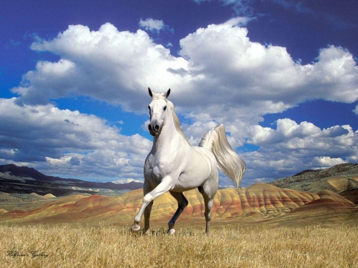 Wallpaper Horse