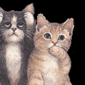 Animate Cats Live Wallpaper logo