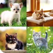 Kittens HD Wallpapers