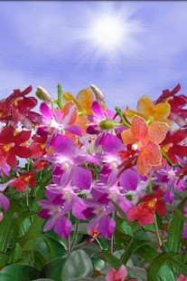 Orchids Free Live Wallpaper - screenshot thumbnail