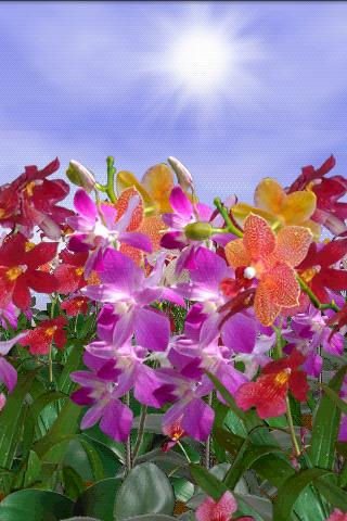 Orchids Free Live Wallpaper - screenshot
