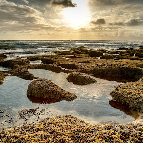 rock pools by Alan Wright - Landscapes Beaches