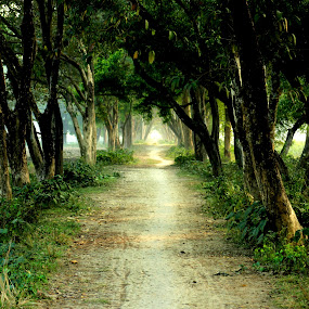 JOURNEY  by Tarunjyoti Tewari - Landscapes Forests ( west bengal, green, journey, forest, road, rural )