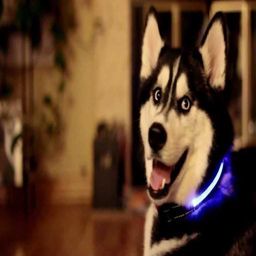Accesorios Led Para Mascotas 購物 App LOGO-APP試玩