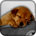 Cute Live Wallpapers icon