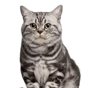 Neko(貓) 個人化 App LOGO-APP試玩