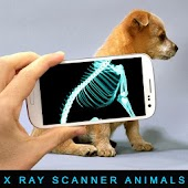 Xray Scanner Animals (Prank)