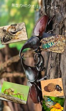 昆虫図鑑 - BugPediaのおすすめ画像1