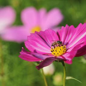 by Pradipta Bagchi - Flowers Single Flower