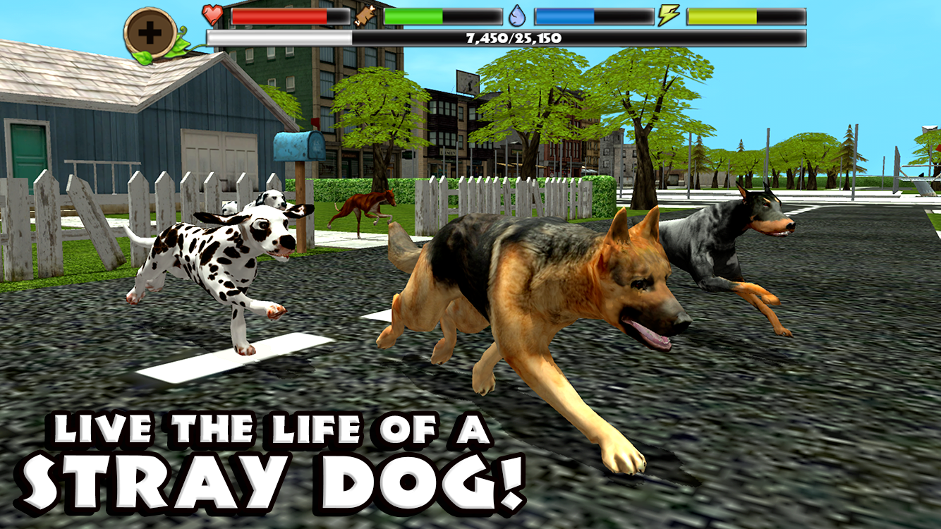 Stray Dog Simulator Android Apps On Google Play - Homeless dog found on the streets becomes a lion in this epic photoshoot