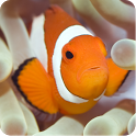 MagicEffect: Clown Fish icon