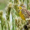 Katy Prairie - Wild + Wonderful
