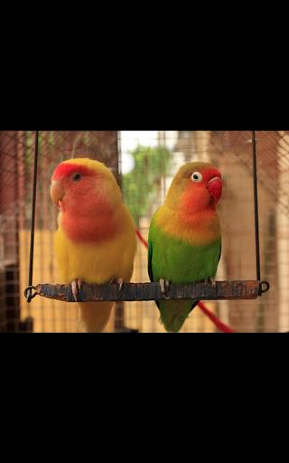 Photo HD Birds Live Wallpaper