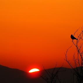 Audience of Sunrise   by Suaib Akhter - Landscapes Sunsets & Sunrises ( sunrise,  )