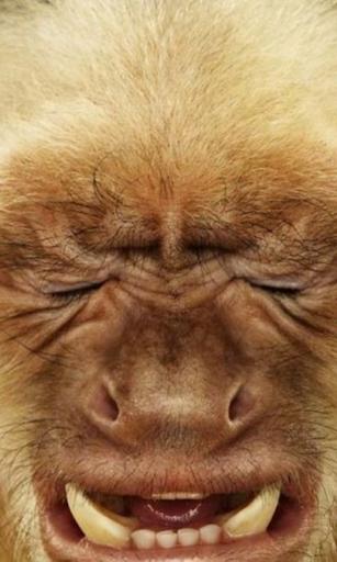 Crazy monkey face Live WP