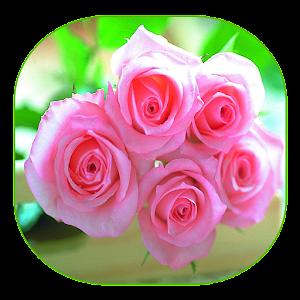 गुलाब प्यार APK