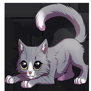 WS: Котик