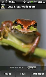 Cute Frog Wallpapers - screenshot thumbnail