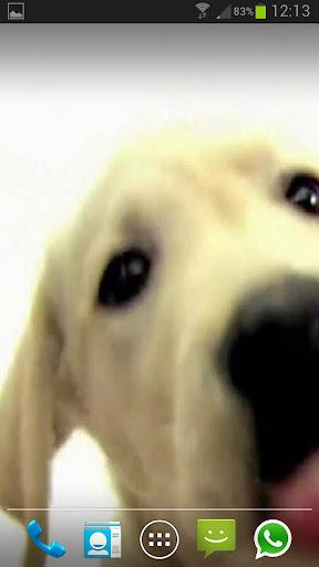 DOG SCREEN CLEANER LWP FREE