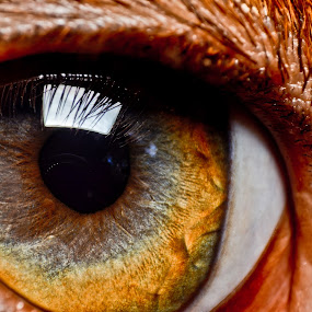WATCHING YOU by Anand Lepcha - Novices Only Macro ( macro, dogs, beauty, nikon, eyes, animal )