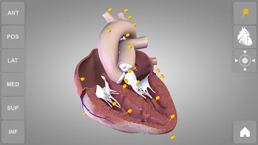 Heart 3D Anatomy v1.0.4