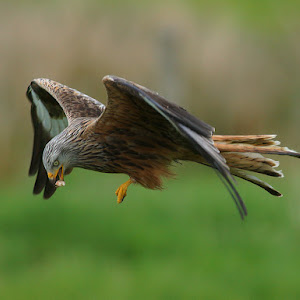 kite 018 low.jpg