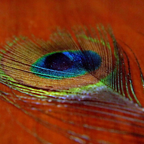 by Amal Vs - Artistic Objects Still Life ( still life, peacock )