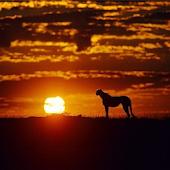 Africa Sunset Water LWP