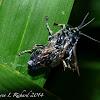 Flies (mating