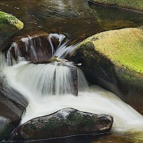 Vydra by Miloš Stanko - Nature Up Close Water ( kámen, voda )