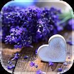 Love Flowers Live Wallpaper